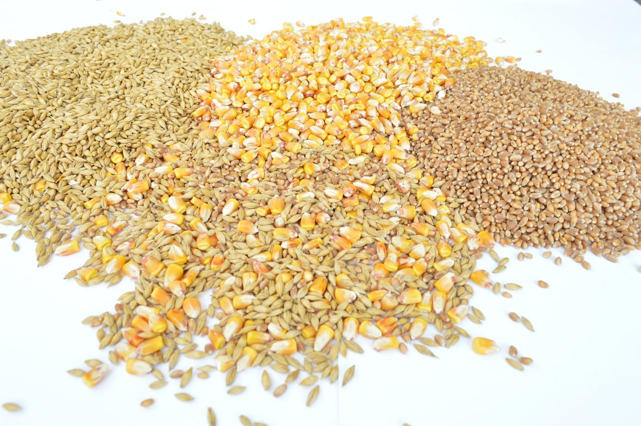 Seleccionadoras de semillas
